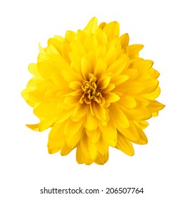 Yellow Flower Images Stock Photos Vectors Shutterstock