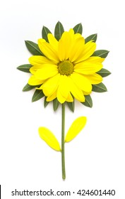 yellow flower isolated on white background. Blooming concept. Flat lay.