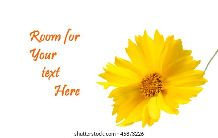 Yellow flower isolated on a white background with room for your text