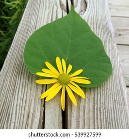 Yellow flower and large green leaf on weathered wooden railing