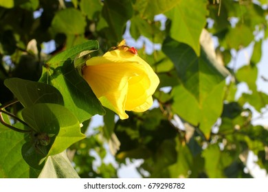 yellow flower with leaf green background