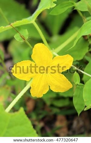 Yellow Flower Little Orange Center Stock Photo Edit Now 477320647