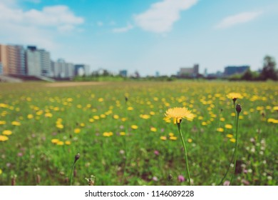 Yellow flower in meadow with beautiful cityscape background