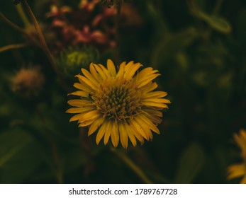 Yellow flower in the middle of plant