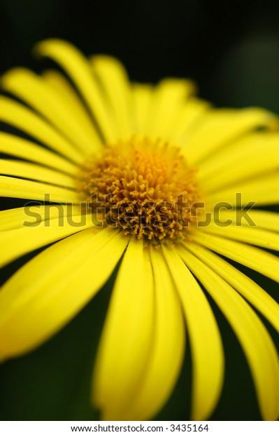 Yellow flower with minimum depth of field
