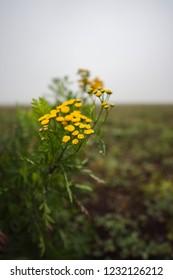 Yellow flower in the misty polumrake
