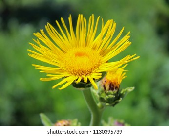 yellow flower on a background of green grass