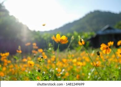 Yellow flower on background sunset