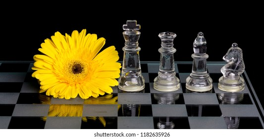 Yellow flower on a black and white glass chess board with king, queen, bishop and knight