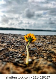 Yellow flower on ground with clouds and sky