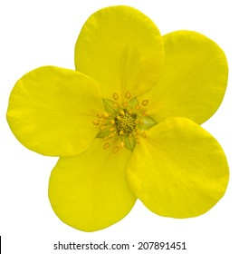 Yellow flower on the isolated background