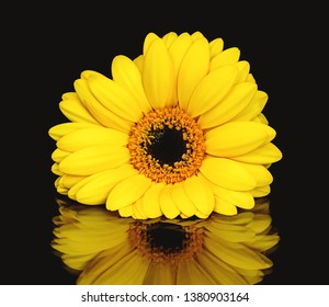 The Yellow Flower on Mirrow