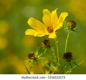 Yellow flower on nice fall day