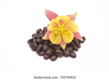 Yellow Flower on Pile of Coffee