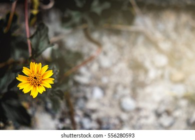 Yellow flower on the rock ground, selective focus