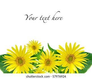 Yellow flower on white background, with space for text