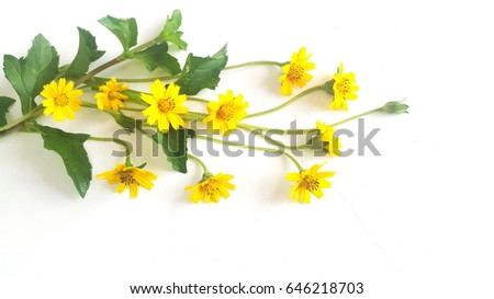 Yellow flower on white background yellow stock photo edit now the yellow flower on white background the yellow flowers bring a bouquet of beautiful mightylinksfo
