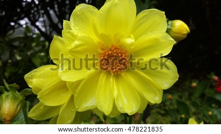 Yellow Flower Orange Center Stock Photo Edit Now 478221835