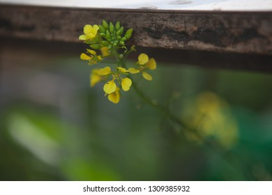 Yellow flower peeking under the rusty fence close-up on the blurred background copy space