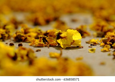 Yellow flower petals on floor fall by faded flowers make beautiful background of nature