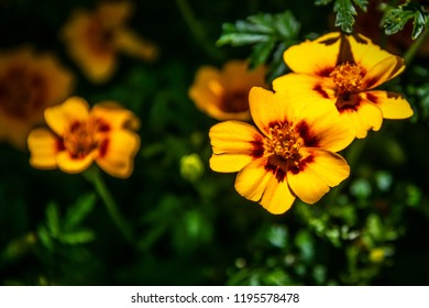 Yellow flower with red center images stock photos vectors yellow flower with red center mightylinksfo
