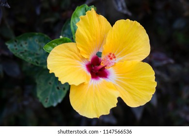 Yellow flower with red center images stock photos vectors yellow flower with red center and pollen in the forest mightylinksfo