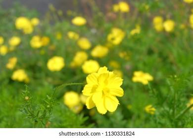 yellow flower in sky
