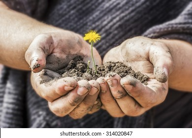 yellow flower with the soil in the hands of a farmer