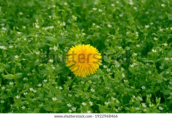 yellow-flower-surrounded-by-small-600w-1