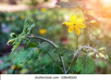 Yellow flower under the sunlight closeup