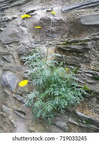 yellow flower in a wall