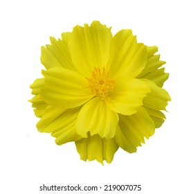 Yellow Flower White Background Images Stock Photos Vectors