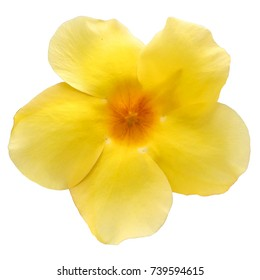 yellow flower white background with clipping
