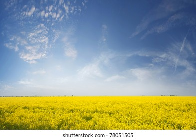 Yellow flowering canola field and blue sky