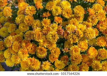 Yellow flowers aesthetic background stock photo edit now yellow flowers aesthetic background mightylinksfo
