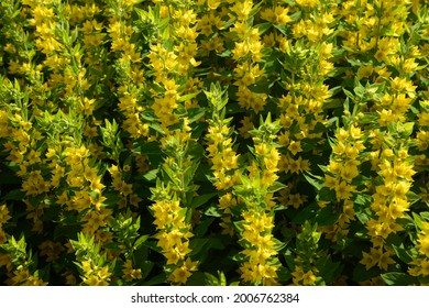 yellow flowers - background and