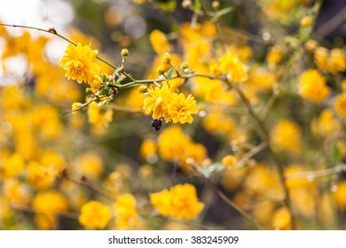 Yellow flowers. Background