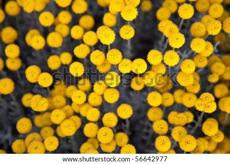 Yellow flowers ball background stock photo edit now 56642977 yellow flowers ball background mightylinksfo