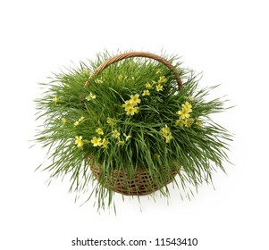 yellow flowers in basket with fresh grass