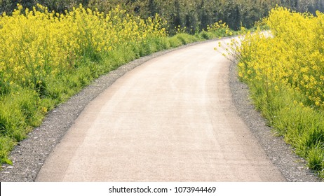 Yellow flowers blossoming beside a walking path