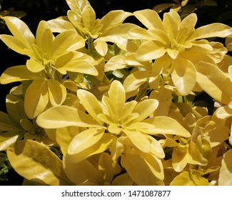 Yellow flowers in bright sun light