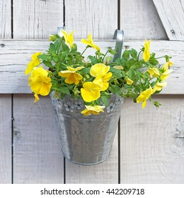Yellow flowers in bucket hanging at wooden wall