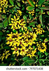 Yellow flowers Bunch