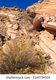 Yellow flowers and cactus in Narrow Pink Canyon in Valley of Fire, Nevada, USA