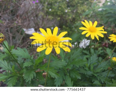 Yellow Flowers Close Found Florida Stock Photo Edit Now 775661437
