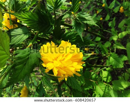 Yellow Flowers Early Spring Stock Photo Edit Now 608420657