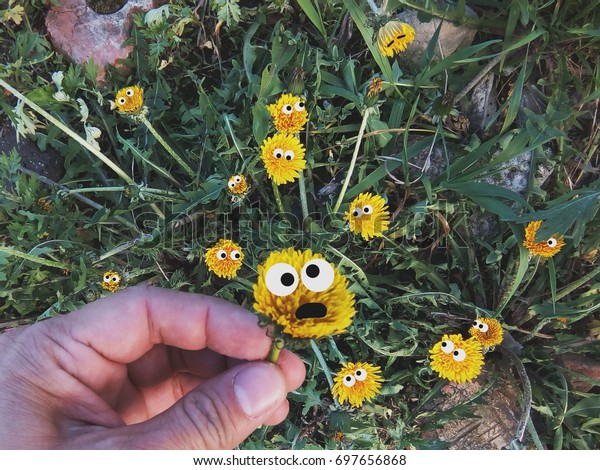 Yellow Flowers Eyes Pluck Flower Fearful Stock Photo (Edit