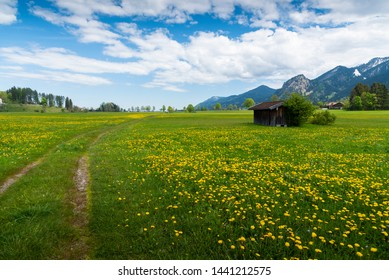The yellow flowers field and snow mountains landscape, Germany