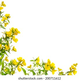Yellow flowers Floral frame, isolated on withe background