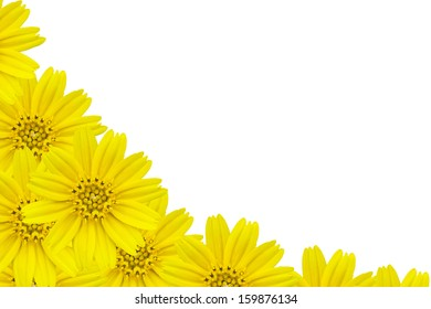 Yellow flowers  Frame on white background